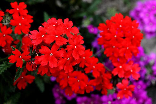 咲く01.jpg