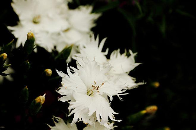咲く10.jpg