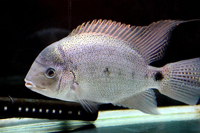 熱帯魚1-1.jpg