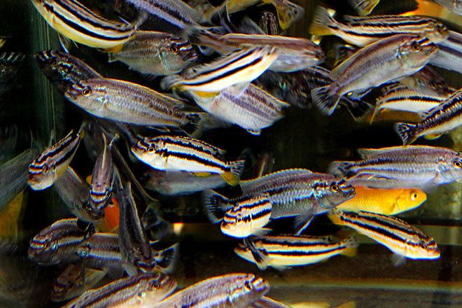 熱帯魚2-2.jpg