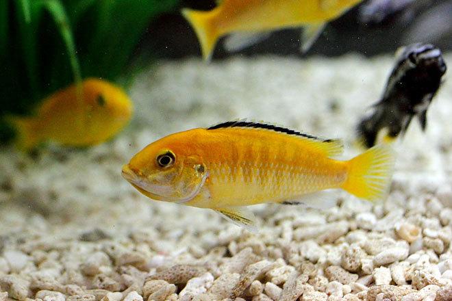 熱帯魚2-3.jpg