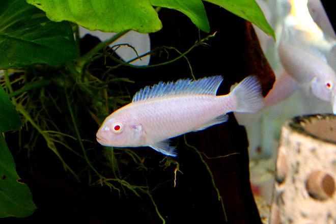 熱帯魚2-4.jpg