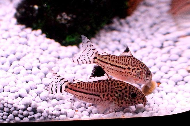 熱帯魚2-5.jpg