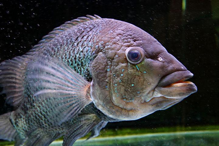 熱帯魚2014-01.jpg