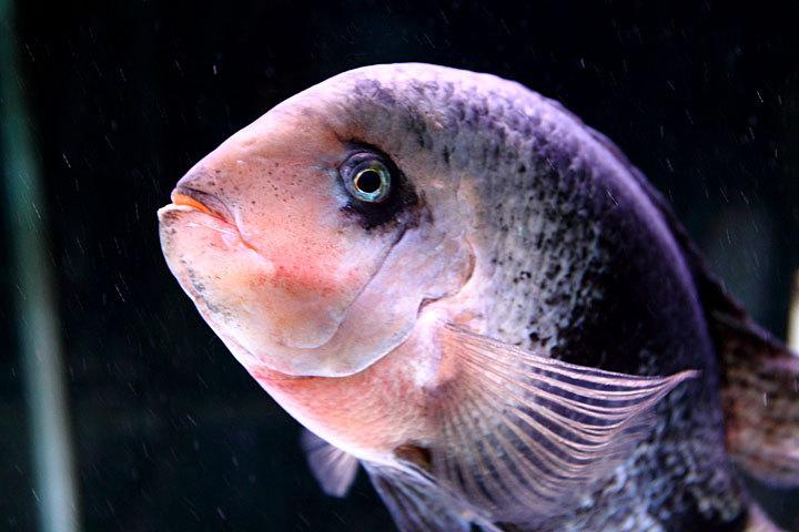 熱帯魚2014-07.jpg