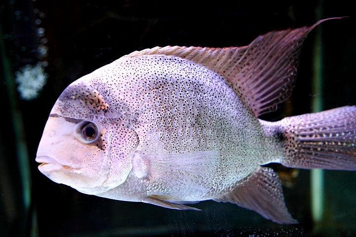 熱帯魚2014-08.jpg