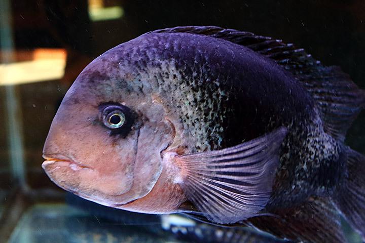 熱帯魚2015-01.jpg