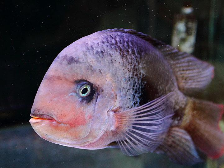 熱帯魚3.jpg