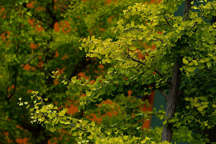 秋が色付く前に.jpg