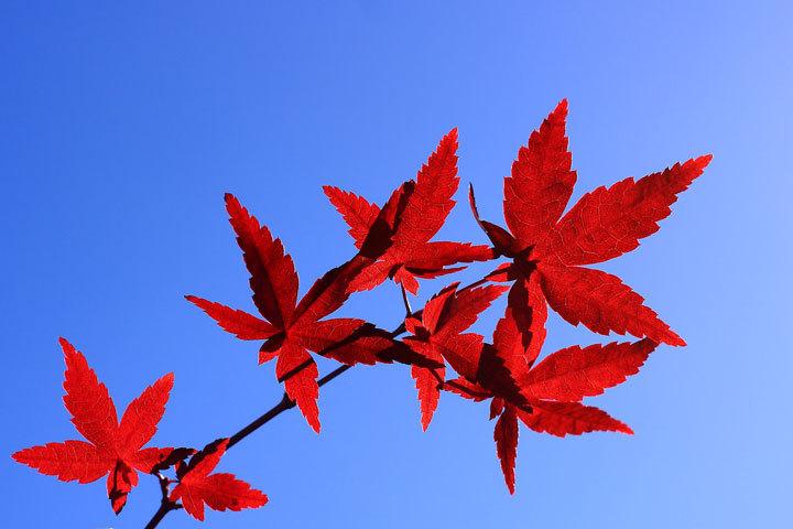秋の名残.jpg