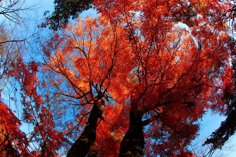 紅葉3.jpg
